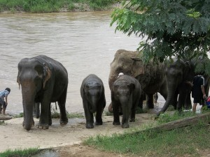 day with elephants on counselling retreat